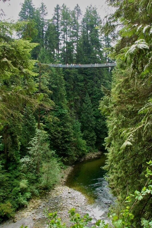 Picture looking up at the capilano suspension bridge