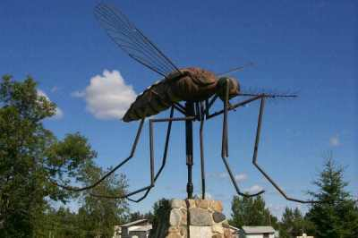 Statue of Giant Mosquito in Komarno Canada