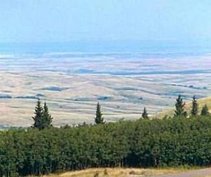 Cypress Hills Massacre View
