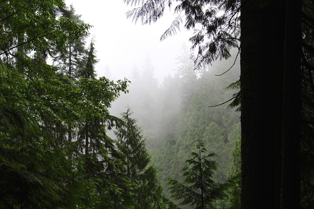 The forests of British Columbia, home of the Sasquatch.