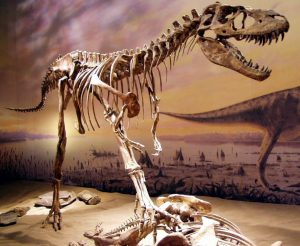 Some believe Alberta's oil and gas industry might suffer the same fate as the Albertosaurus- a dinosaur whose skeleton graces the Royal Tyrell Museum in Drumheller, Alberta.