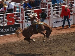 A bronc rider at the Calgary Stampede.