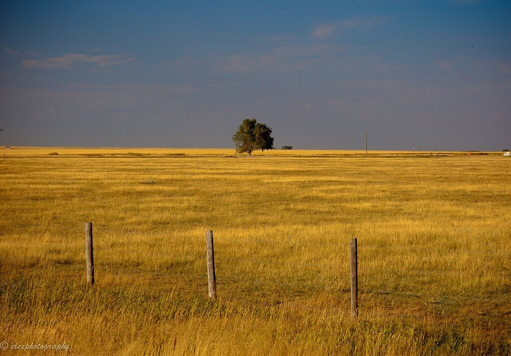 Alberta has often been called 'The Texas of Canada', and with good reason.